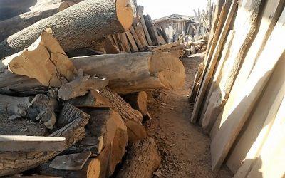 فروش چوب