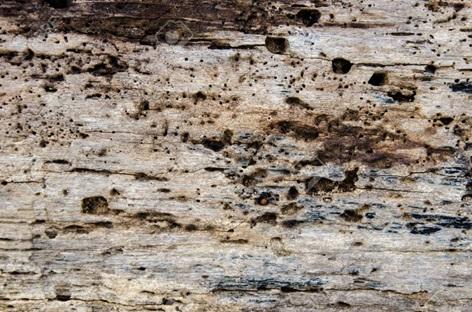 پوسیدگی چوب کاج و عوامل موثر بر آن- نمونه پوسیدگی چوب در اثر موریانه