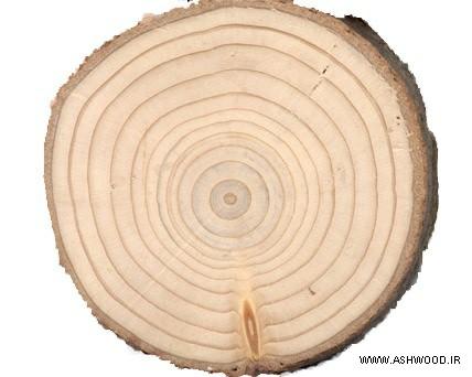 همه چیز درباره چوب روسی - نمایی از حلقه های رشد در کنده
