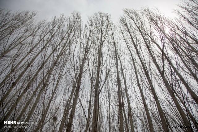 قطع درختان بی رویه , زخم تبر بر تن درختان ارسباران