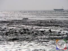 ساحل خلیج فارس پساز جزر دریا، سواحل بندر عباس