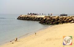 اساحل شیب دراز، محل تخم ریزی لاک پشت های جزیره قشم