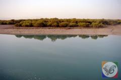 سواحل جنگل حرا در جزیره قشم