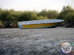 قایقی در جنگل های حرا، جزیره قشم
