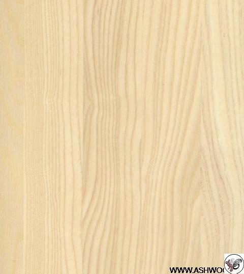 روکش چوب درخت زبان گنجشک یا خاکستر اروپایی یا اش وود