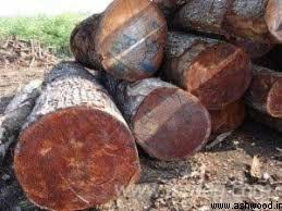 چوب درخت آکاژو