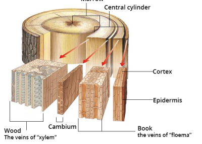 اصطلاحات و نکات فنی در صنایع چوب
