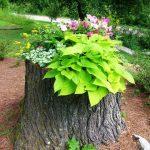 ایده های جدید و منحصر به فرد برای تنه درخت در دکوراسیون داخلی منزل