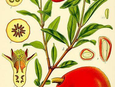 عکس طارمی , نرده کوتاه و هندریل
