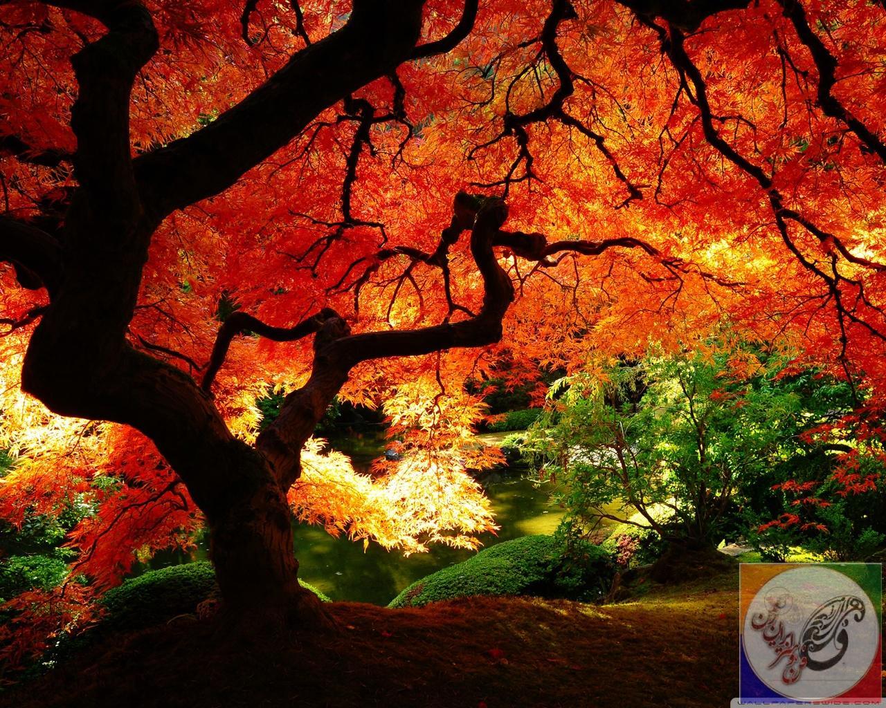 Beautiful Autumn HD desktop wallpaper