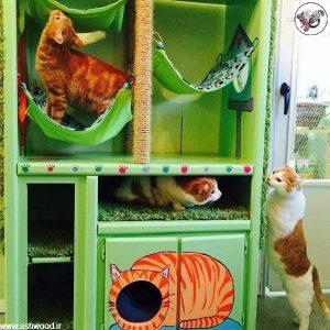 ایده خانه ای برای سگ و گربه خانگی ایده خانه ای برای سگ و گربه خانگی