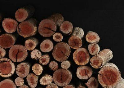 تنه درخت , رنگ مشکی , چوب شاخه