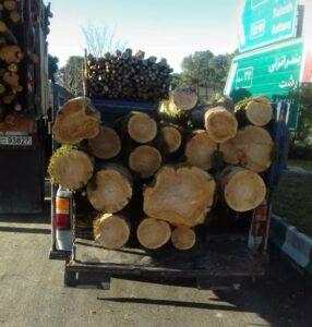 فروش انواع چوب و تخته , الوار و تنه درخت