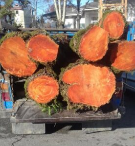 تنه درخت توسکا , فروش انواع چوب