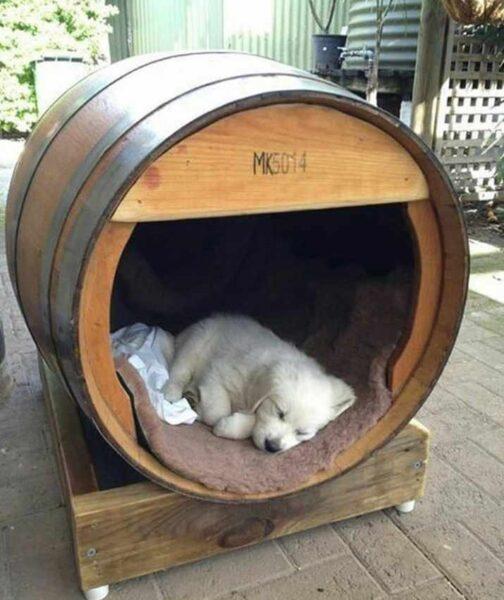 خانه حیوانات , خانه سگ