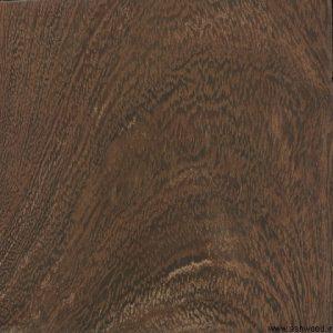 اکاسیا , Vachellia erioloba syn. Acacia erioloba خار شتر , تیغ شتری
