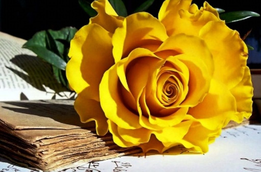 گلهای زیبا و جذاب