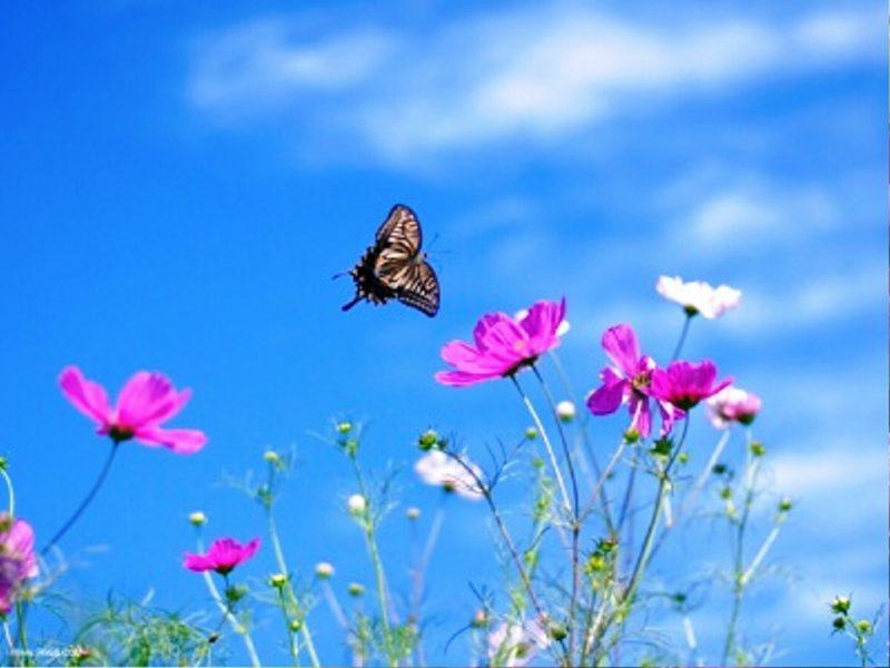 عکس hd با کیفیت٬ عکس جالب جذاب زیبا٬ عکس روز٬ گالری عکس٬