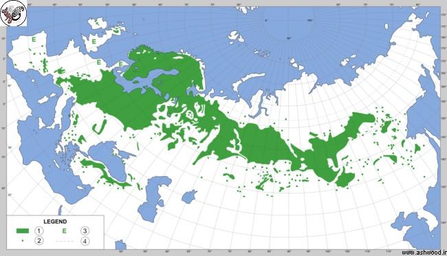 گستردگی رویش درخت کاج ساسنا در نقشه کره زمین