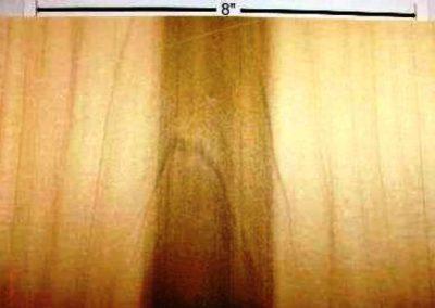 درباره درخت صنوبر , تبریزی , چوب سپیدار , چوب صنوبر