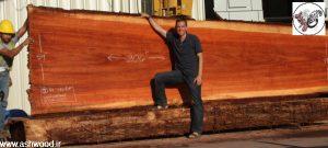 ردوود آمریکا , چوب قرمز آمریکایی