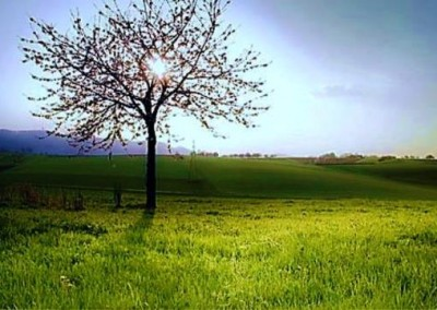 گالری عکس منظره طبیعت در بهار