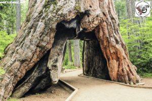 چوب ردوود (redwood) مناسب کفپوش و دکوراسیون خارجی