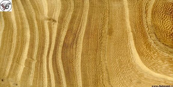 چوب ملچ , کاربرد چوب ملچ , قیمت چوب ملچ