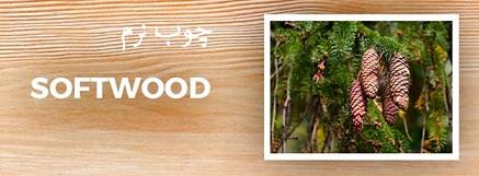 آشنایی با انواع چوب های نرم و سخت و کاربرد آن ها