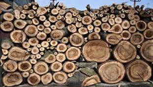 چوب درخت انجیر