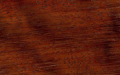چوب ساج آفریقا