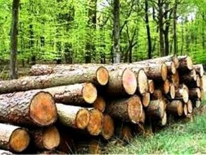 اخبار قاچاق چوب
