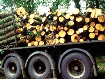 اخبار چوب : کشف محموله چوبهای قاچاق تاغ در سمنان