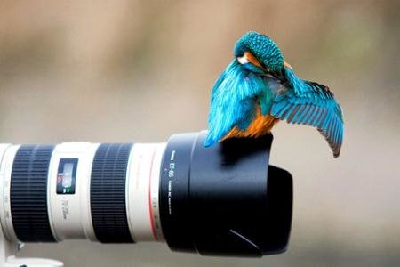 روز جهانی عکاسی