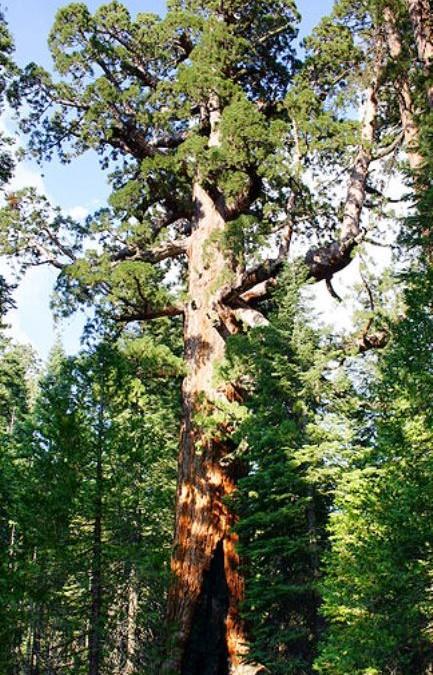 از گونه های پایدار در دکوراسیون چوبی استفاده کنیم