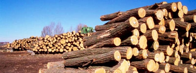 بررسی تولید انواع فرآوردههای چوبی جنگلی در استان مازندران
