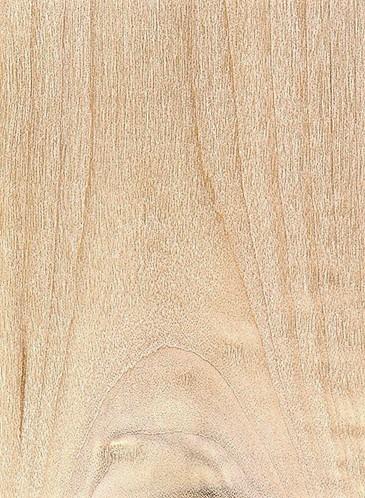 پنبه سیاه (Populus trichocarpa)