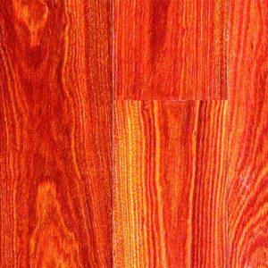 طبقه bloodwood جنگلی مینیاپولیس