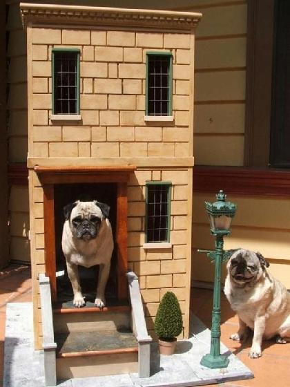 خانه سگ , کلبه چوبی , خانه حیوانات
