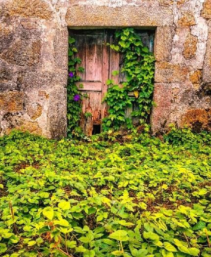 عکس درب چوبی قدیمی , تصاویر جالب و زیبا از درب های چوبی قدیمی