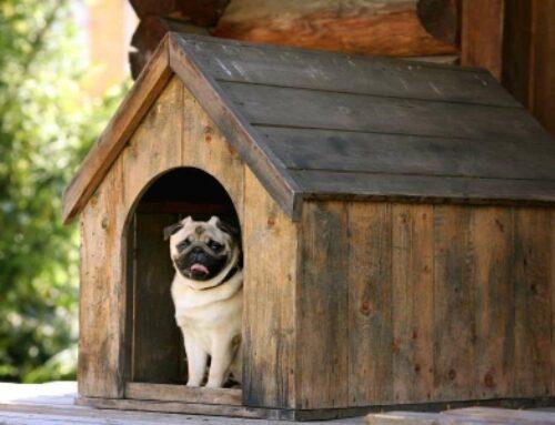 خانه سگ، لانه سگ بزرگ با تراس