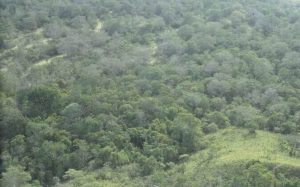 جنگل های امازون برزیل