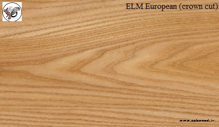 چوب نارون , چوب نارون مشخصات چوب نارون