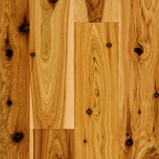 چوب درخت سرو استرالیا