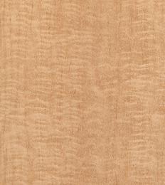 چوب درخت افرا