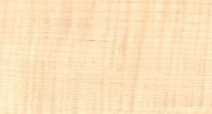 چوب درخت افرا - انواع چوب درخت افرا