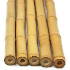 ساقه های خشک شده گیاه بامبو