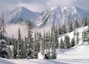 جنگل تایگا در زمستان