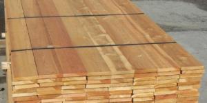 همه چیز در مورد تخته کاج روسی - کاج سیبری (Pinus Sibirica)