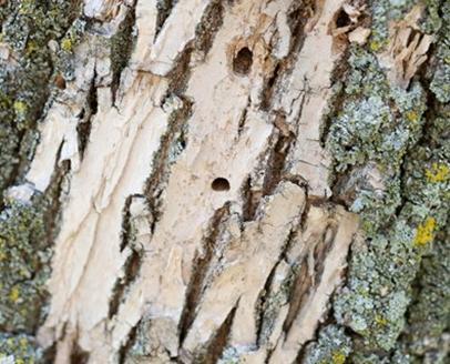 همه چیز راجع به تنه ی درخت - اجزای تشکیل دهنده ی تنه ی درخت